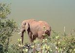 Addo Elephant Park Day Tour