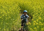 Nagano Full-Day Cycling Tour with Snow Monkey, Obuse Town, Apple Orchards