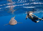 Half-Day Snorkeling or Swimming with Sharks Tour in Cabo San Lucas