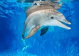 Clearwater Marine Aquarium Day Trip from Orlando