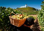 Wine Tasting Tour from Santiago: Casablanca Valley and Four Vineyards