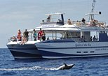 Gran Canaria Whale and Dolphin Spotting Cruise with Optional Swim Stop