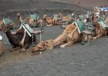 Camel safari in Timanfaya