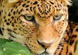 11Day Best of Kenya and Tanzania Group Camping Safari