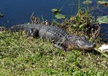 Everglades Airboat Ride and Wildlife Nature Show from Miami