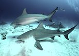 2-Tank Bull Shark Dive in Playa del Carmen
