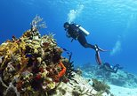 Cozumel Express 2-Tank Dives from Playa del Carmen