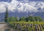Full Day Tour: Culture of Wine in Mendoza