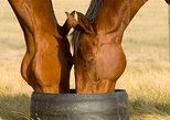Australia & Pacific - Australia: Champion Racehorse Tour with Beer and Wine Tasting