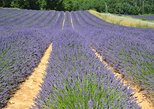 Small-Group Day Trip to Lavender Fields and Provencal Villages including Lavender Museum Visit from Arles