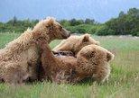 Premium Bear Viewing Tour