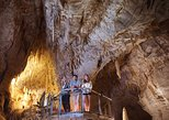 Small-Group Waitomo Ruakuri Caves and Kiwi Experience Tour from Auckland