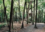 Auckland Shore Excursion: Small-Group Coast and Rainforest Tour