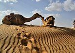 Full day Camel Safari Oman Wahiba Sands