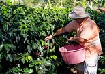 Doka Estate Coffee and Sugar Cane Tour with Butterfly Garden
