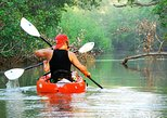 Nosara river guided kayak mangrove and environment watching tour in Guanacaste