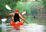Nosara river guided kayak mangrove and environment watching tour in Guanacaste