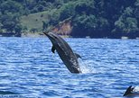 Dolphin watching mangrove snorkeling tour at Golfo Dulce in the Pacific side