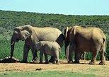 3-Day Weekend Wildlife Safari Tour