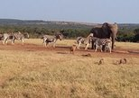 6 Day Cape to Addo Safari