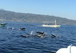 Dolphin Watching in Lovina