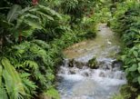 Botanical Garden and Plantation Tour- Ocho Rios only