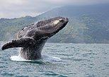 Juneau Shore Excursion: Whale-Watching Excursion