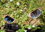 Private Tour: Discovery Tour of Entopia Butterfly Farm in Penang