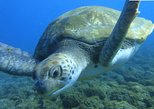 Guided Snorkeling with Turtles with Free Pictures in Tenerife