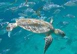 Barbados: Fahrt mit Glasbodenboot, Schiffswrack-Abenteuer uns Strandtag