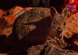Alice Springs Desert Park Nocturnal Tour