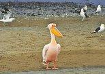 Pelican Point Peninsula Tour