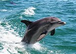Full-Day Mandurah Dolphins, Chocolate & Fremantle Tour