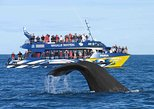 2 Day Tour to Bentota & Whale Watching From Colombo