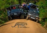 Private 02 Day Leopard Safari in Yala from Colombo