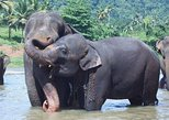 Private Day Tour To Kandy With Pinnawala Open Zoo From Waikkal