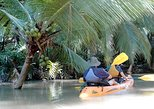 Mangrove monkey land on kayak or motor boat
