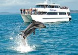 Bay of Islands: Full-Day Tour, Hole in the Rock and Dolphin Cruise from Auckland