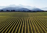 Full-Day Marlborough Wine Tour from Picton or Blenheim