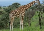 Full-Day Akagera National Park Safari from Kigali
