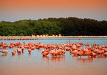 Private Tour: Celestun Biosphere Reserve from Merida