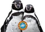 Ocean Aquarium Park Protaras Ticket only
