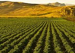 Half-day Private Sicilian Wine Tasting and Winery Tour from Palermo