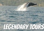 From Puerto Plata-Sousua Famous Whale Samana Cayo Levantado with Whale Biologist