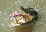 Darwin Jumping Crocodiles Cruise on Adelaide River