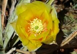 Flowers in Sedona Photography Tour Special