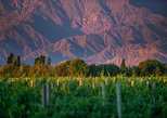 Cafayate Wine Route Day Tour from Salta