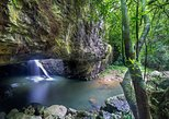 Springbrook and Tamborine Rainforest Tour Including Natural Bridge and Glow Worm Cave