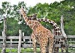 Coron Calauit Safari Tour E