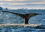 Whale Safari - Private charter 1-6 Passengers - Cabin boat
